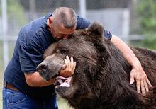 Человек и медведь объятия