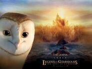 Soren Barn Owl