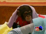 Monkey Business.00008