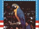 1987 WWF Wrestling Cards (Topps) Frankie (No.4)