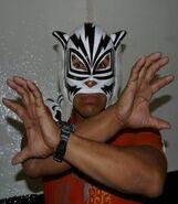 Tigre Blanco 1