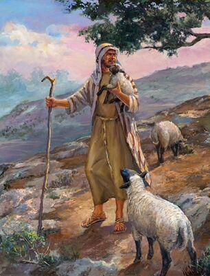 Shepherd2
