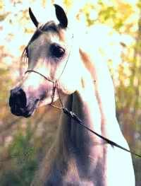 White horse3