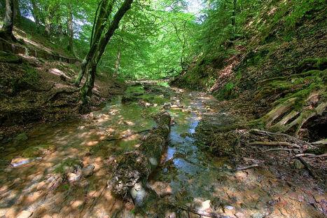 Welsh-woods3