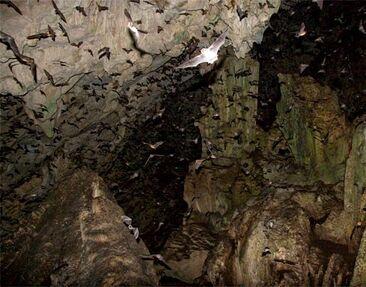 Bat-cave1