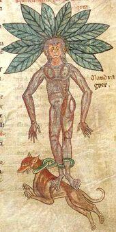 Medieval bestiary1 - Edited