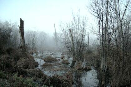 Misty-Bog