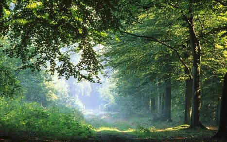 Forest-in-Germany