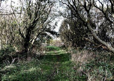 Welsh-Woods