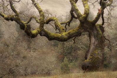 Hollow-Oak2
