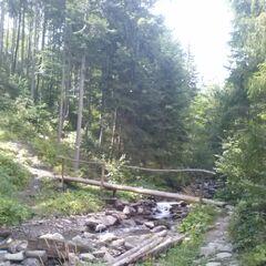 Początek trasy - droga przez las
