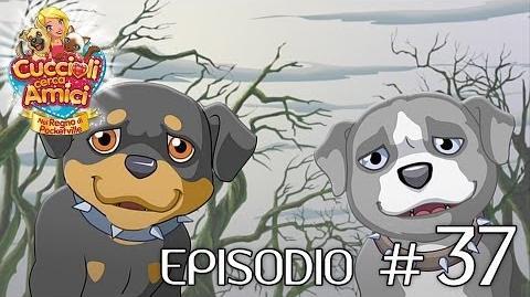 Cuccioli Cerca Amici - Ep 37 Il tesoro dell'amicizia (parte 1)