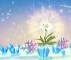 Kwiat samotnika