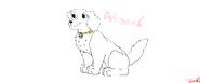 PP Andromeda