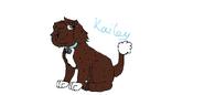 Psi patrol kailey-0