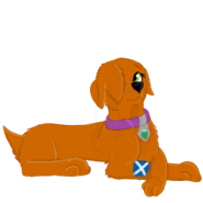 Milaria lying with flag of Scotland painted on her paw Scotland Trip Special 2019