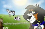 Domi in the farm