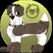 Bante by Chye