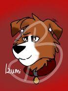 Izumi for Puppy