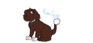 Psi patrol kailey