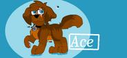 Aceeeee