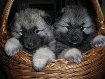 2 szczeniaczki