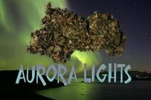 LegalHerbalShop-aurora lights legal bud