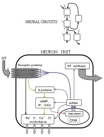 NeuroPimage1