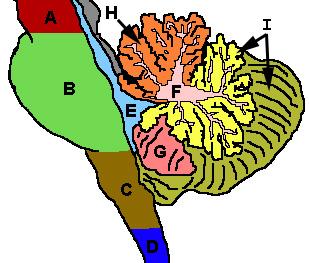CerebellumRegions