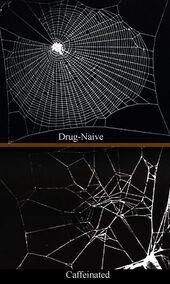 Caffeinated spiderwebs