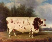J Loader 1845 Shorthorn Bull