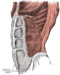 Grays Anatomy image392