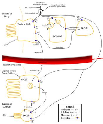 Control-of-stomach-acid-sec