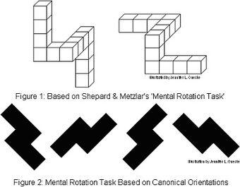Mental rotation | Psychology Wiki | FANDOM powered by Wikia