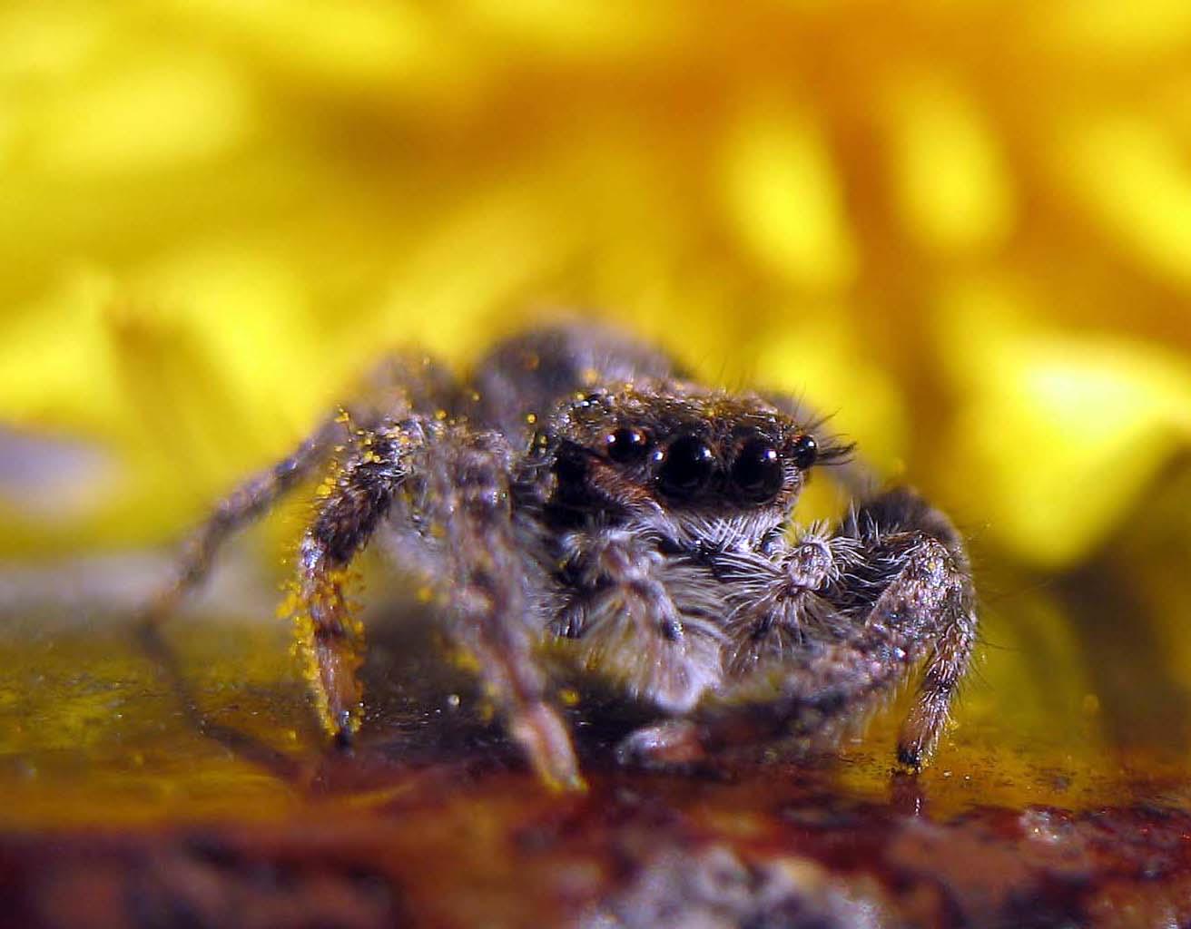 Spiders | Psychology Wiki | FANDOM powered by Wikia