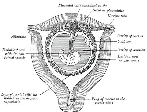 Cervix Psychology Wiki Fandom Powered By Wikia