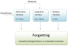 Multi-store-diagram(psychology)