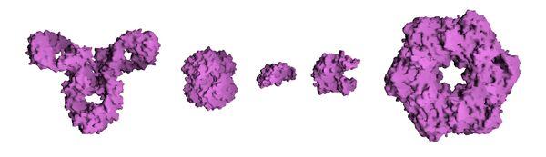 Protein Composite