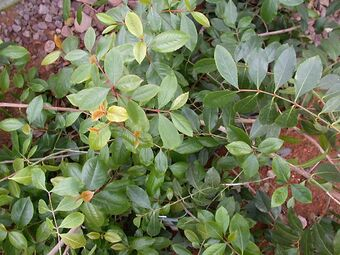 List Of Psychoactive Plants Psychology Wiki Fandom Powered By Wikia