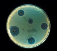 Staphylococcus aureus (AB Test)