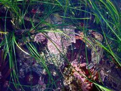 Camouflaged crab