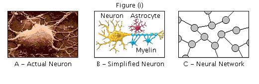 Brain repair figure i