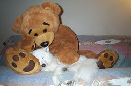 Samoyed-and-teddy-bear