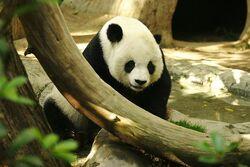 Lightmatter panda