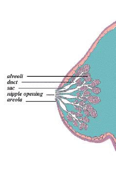 Breastfeeding(milkfinal)