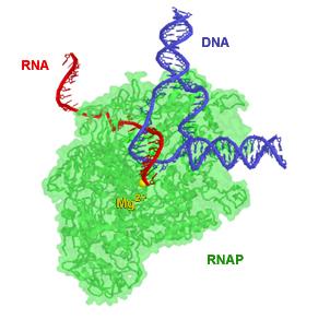RNAP TEC small