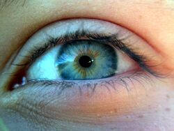 Closeup of an blue-green human eye