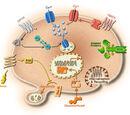 Post-transcriptional modification