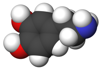 Dopamine | Psychology Wiki | FANDOM powered by Wikia
