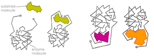 Two substrates c
